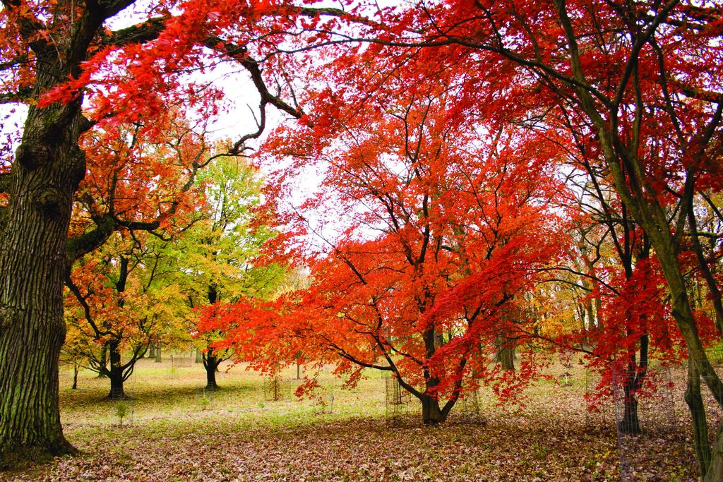 Homepage | Botanic Gardens Conservation International