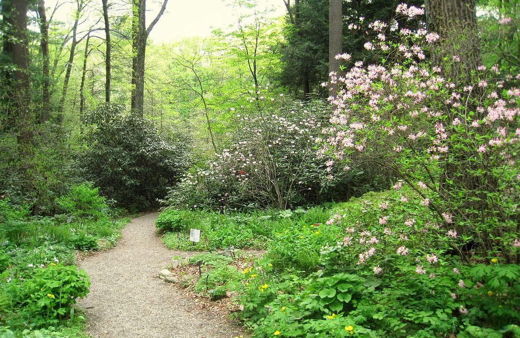 Native Plant Trust - Garden in the Woods