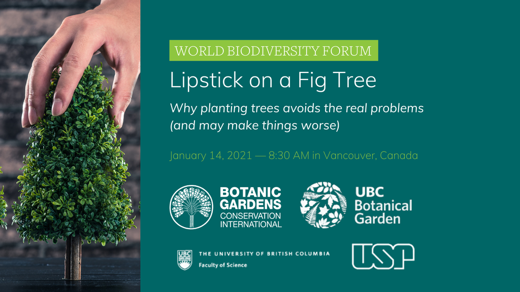 Lipstick on a Fig Tree