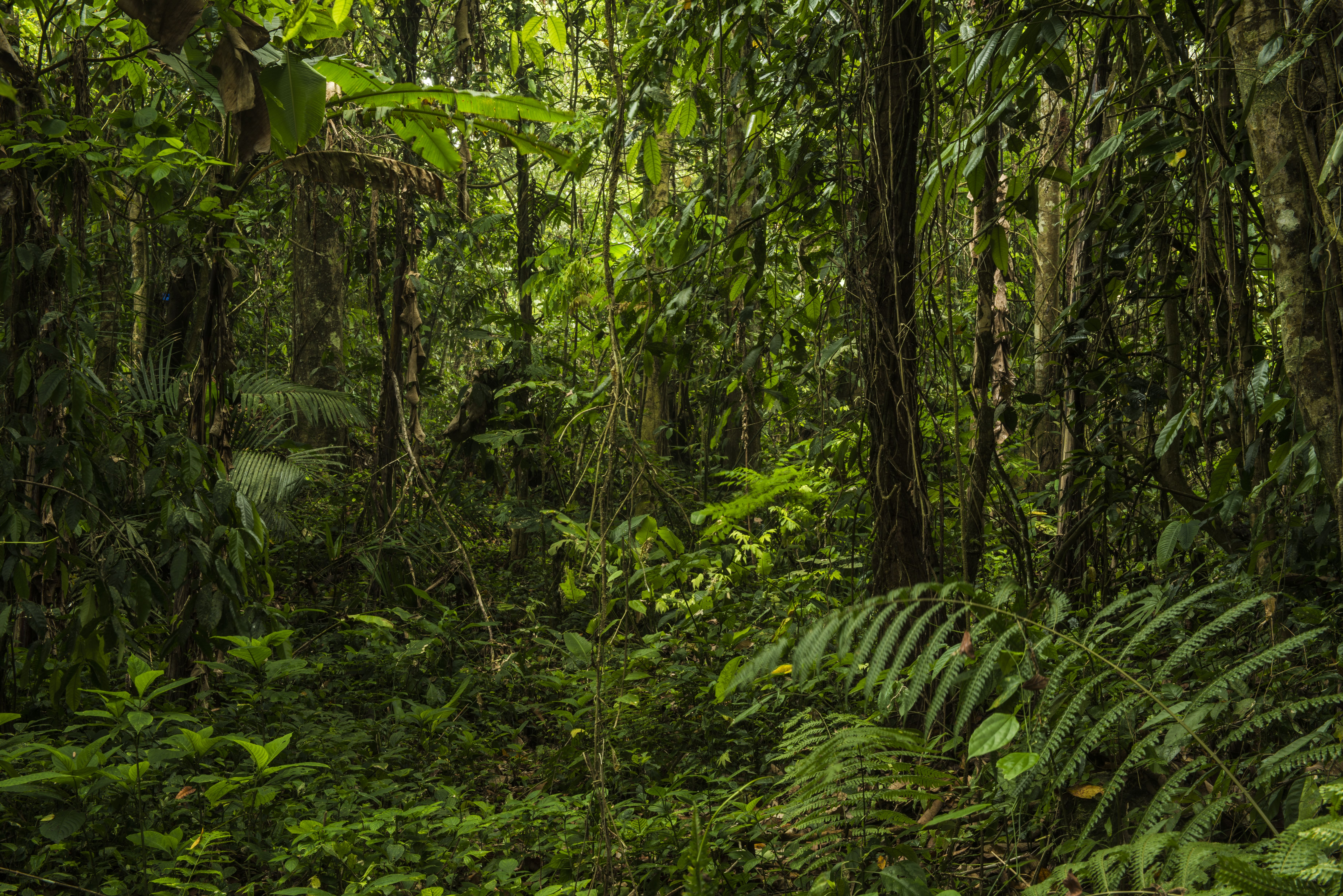 About Plant Conservation | Botanic Gardens Conservation International
