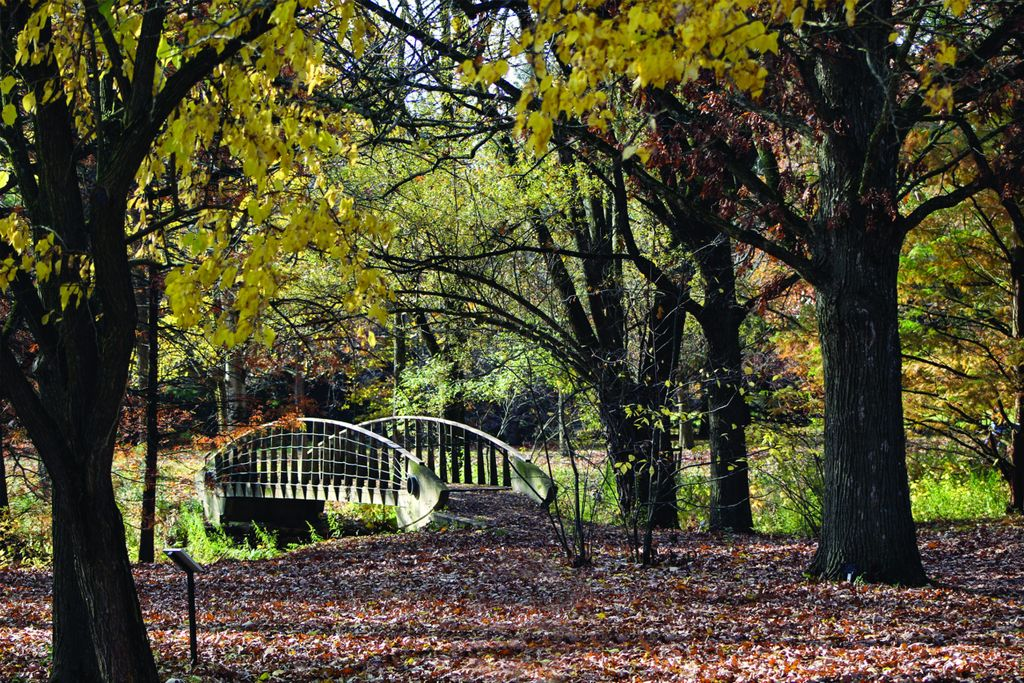 Flying Fish Bridge, The Arboretum, University of Guelph