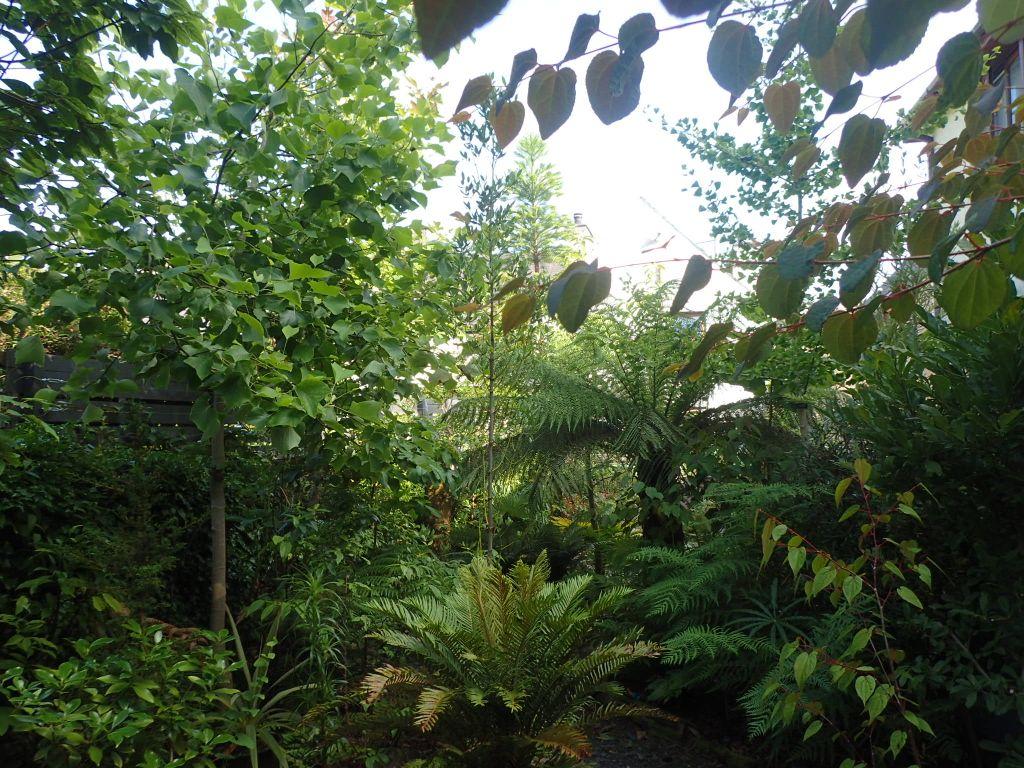 Fossil Plants, UK