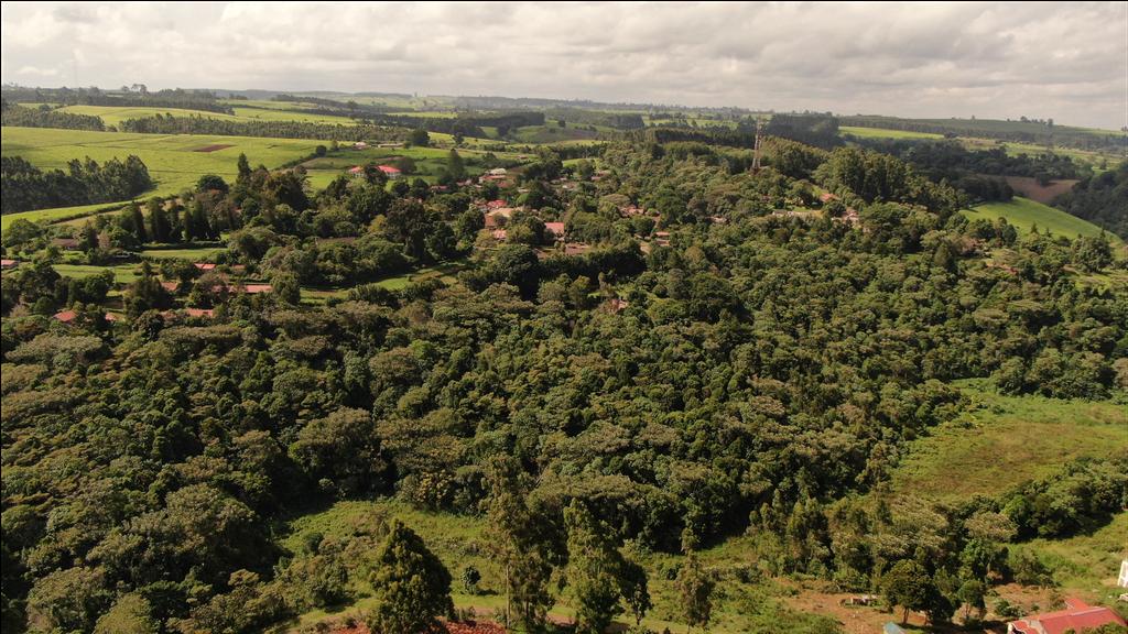 Brackenhurst Botanic Garden & Forest