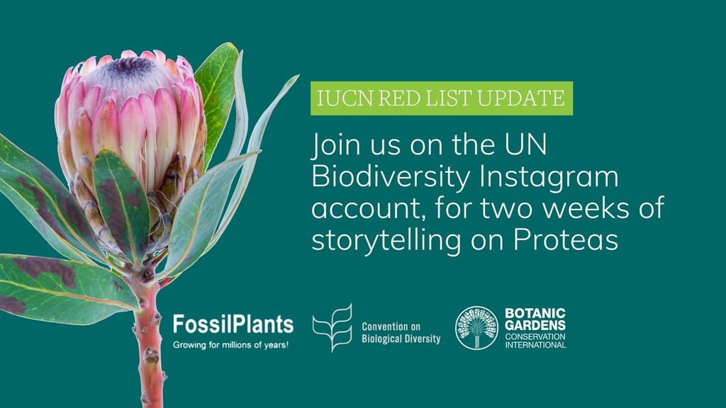IUCN Red List Update - Proteas